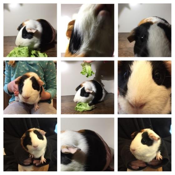 4-pig-photo-shoot